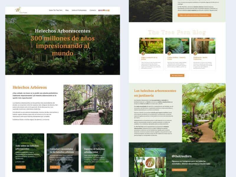 The tree fern – 111 Juan Pardo
